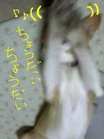 Cyoudai2_2