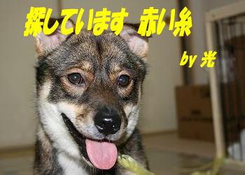 Kou_bana_2