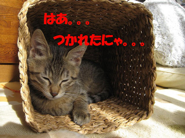 Img_84412